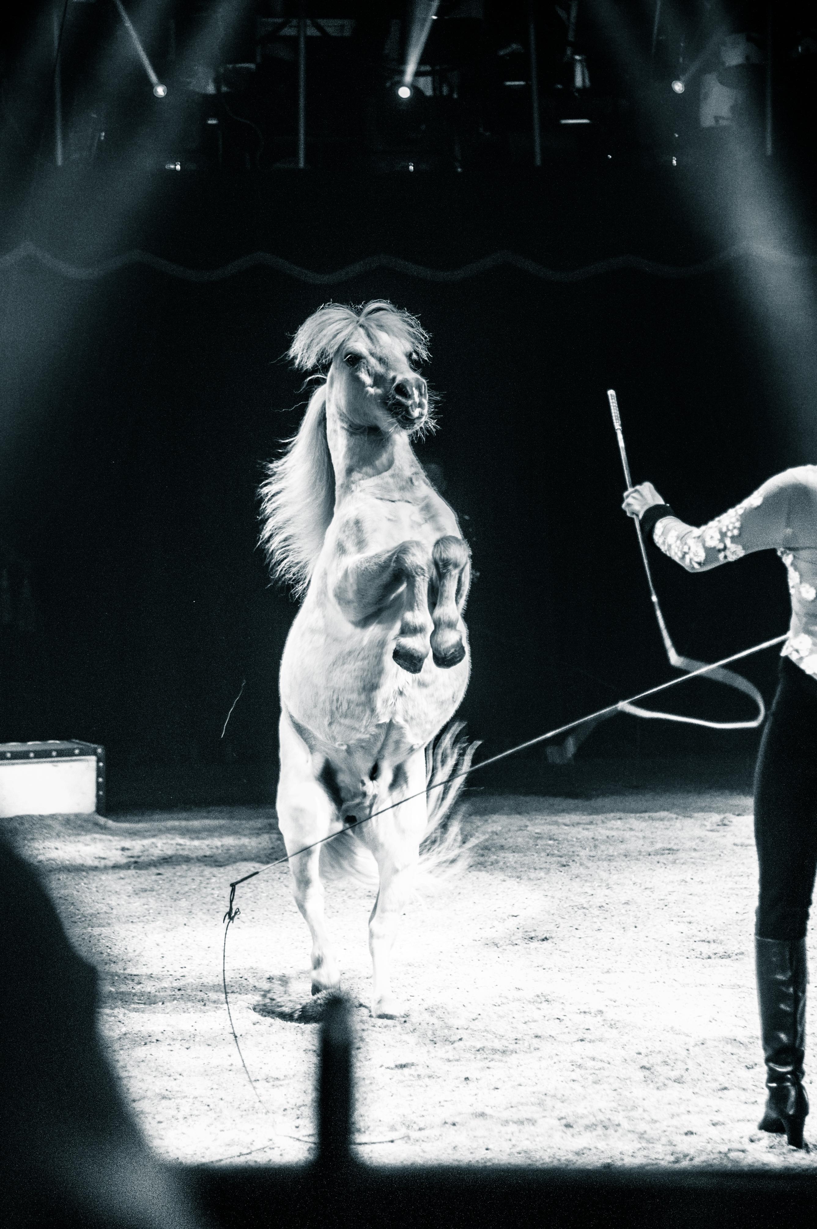 Première_Circus_Nock-50