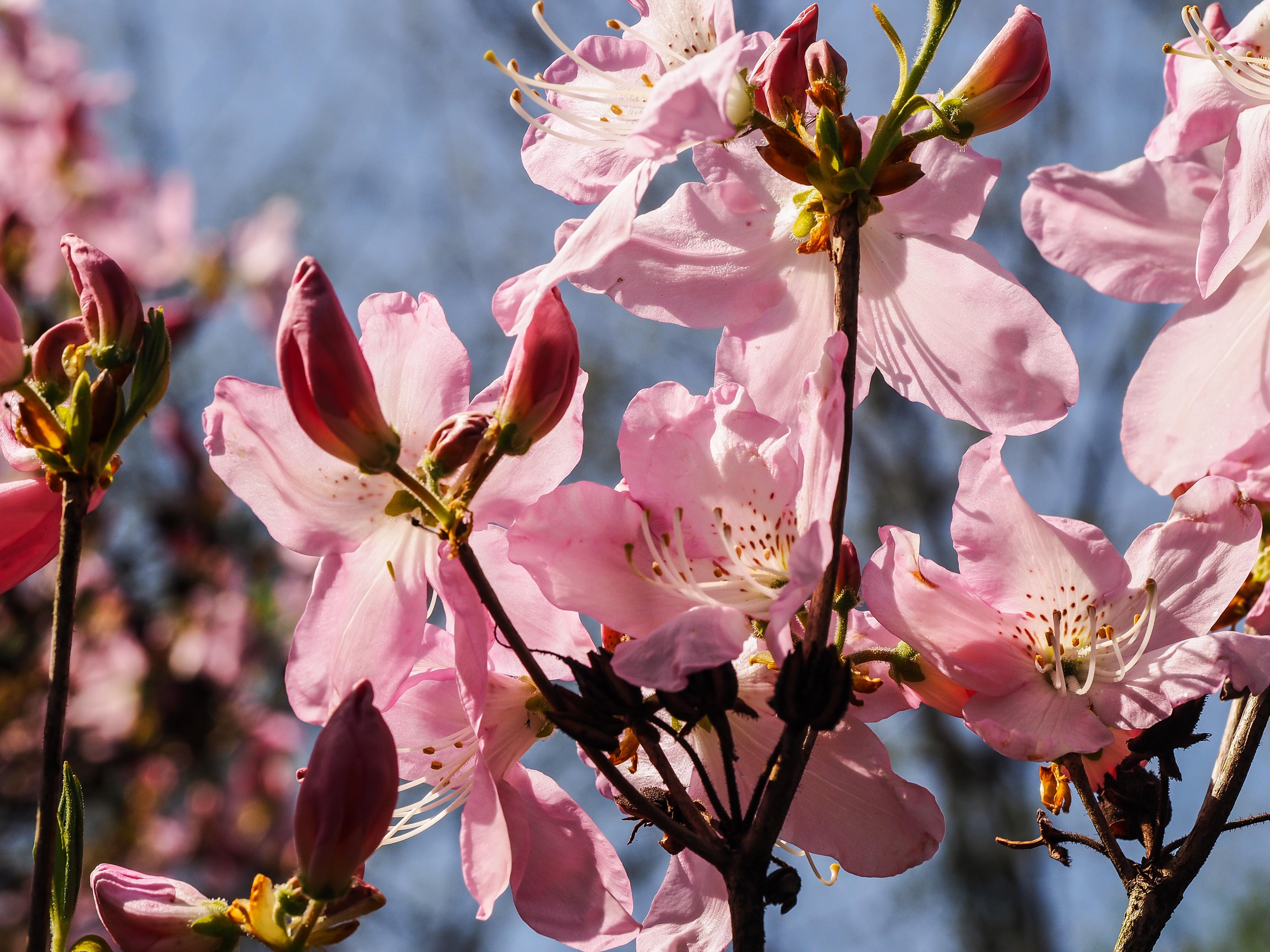 Frühling_16-29