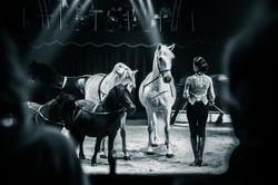 Première_Circus_Nock-48
