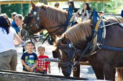 Kinder mit Pferden