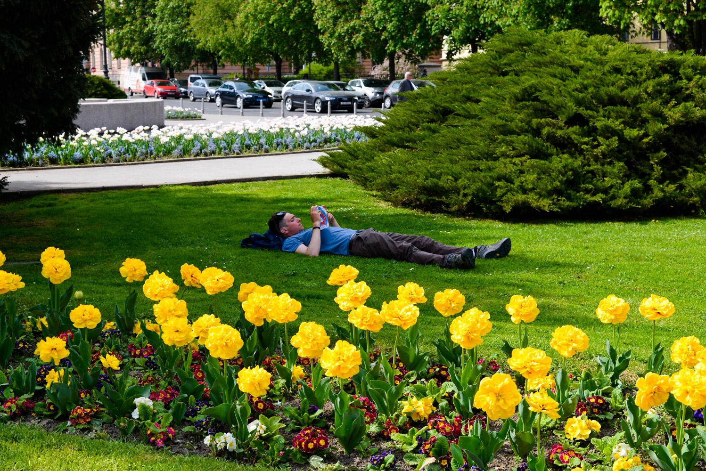 Mann in einer Blumenwiese in Zagreb
