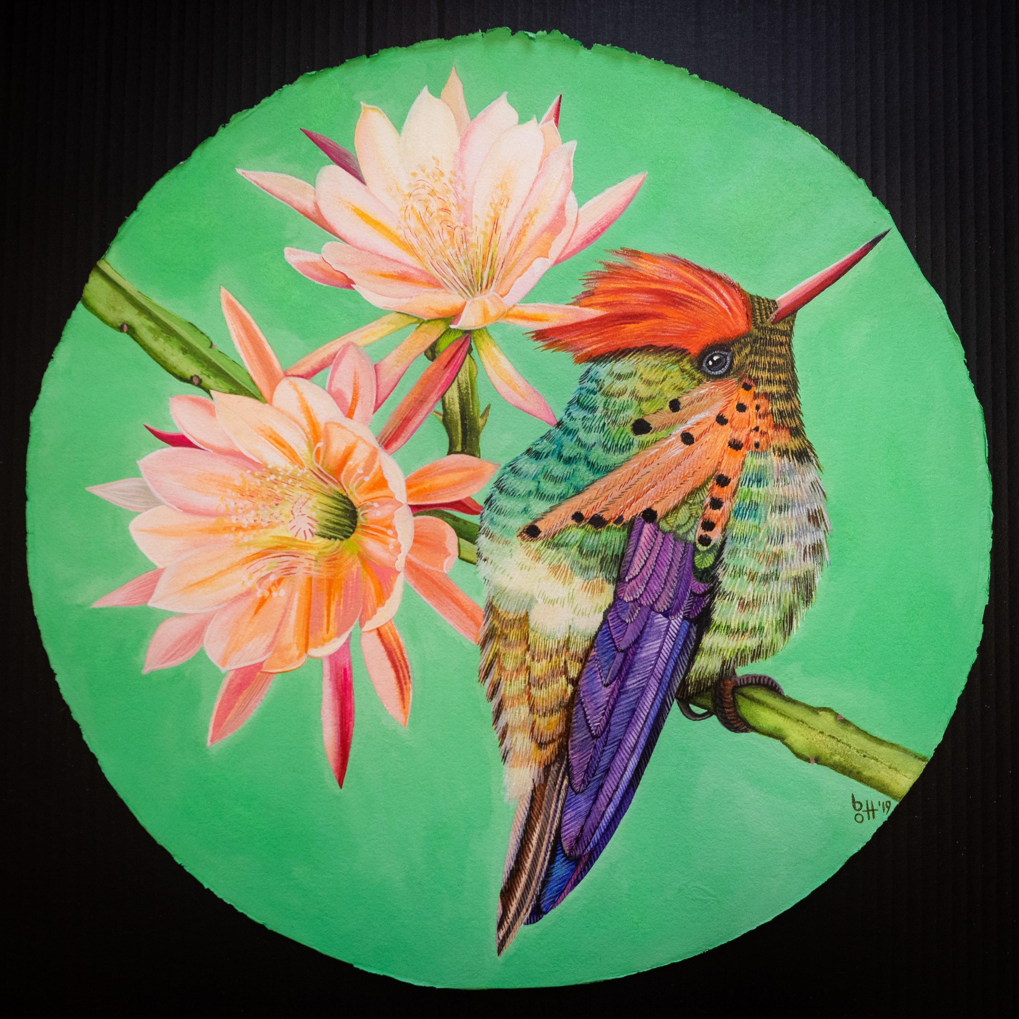 bellis et animal - Kolibri II