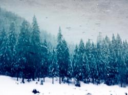 skoga 4