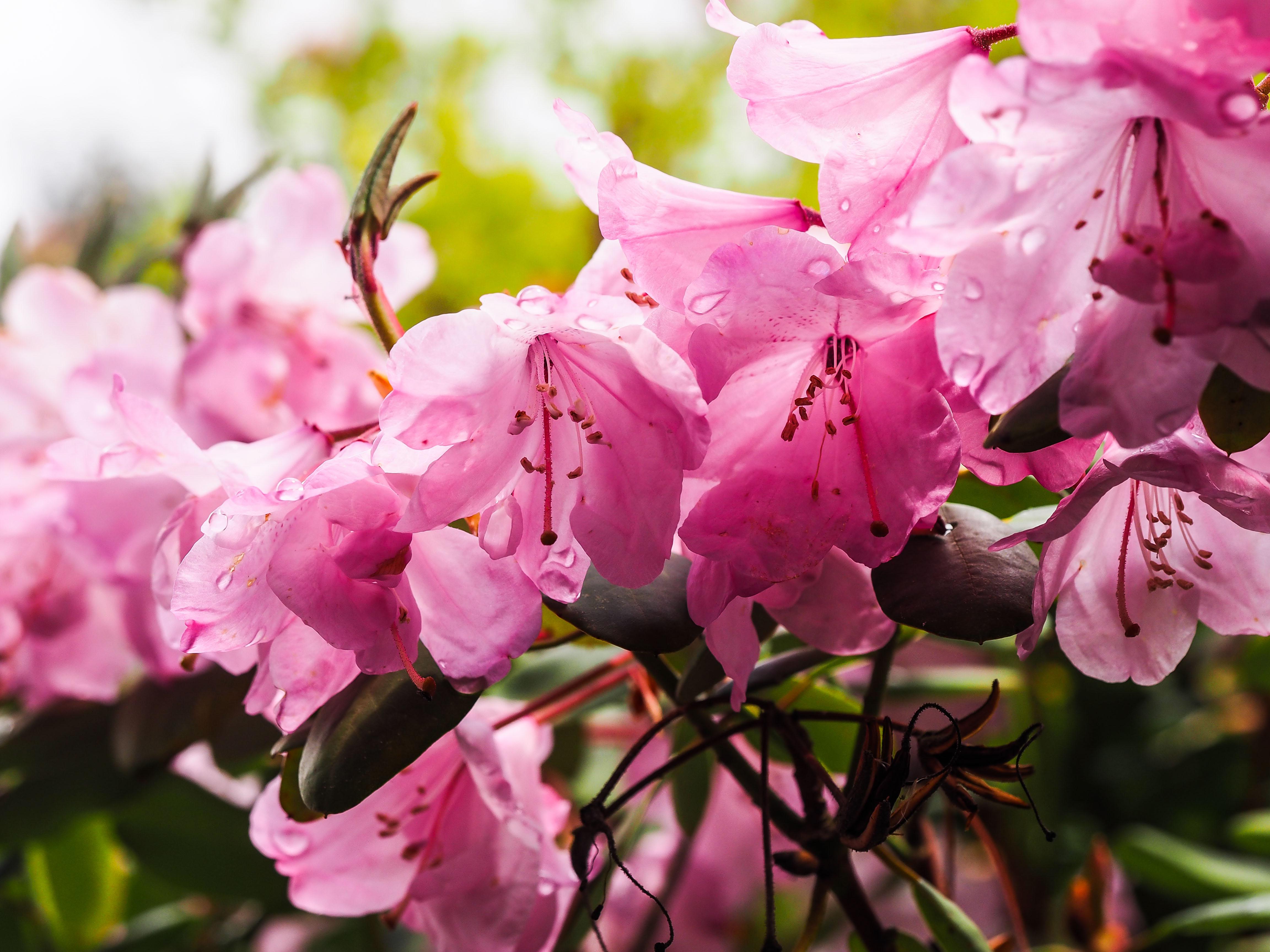 Frühling_16-58