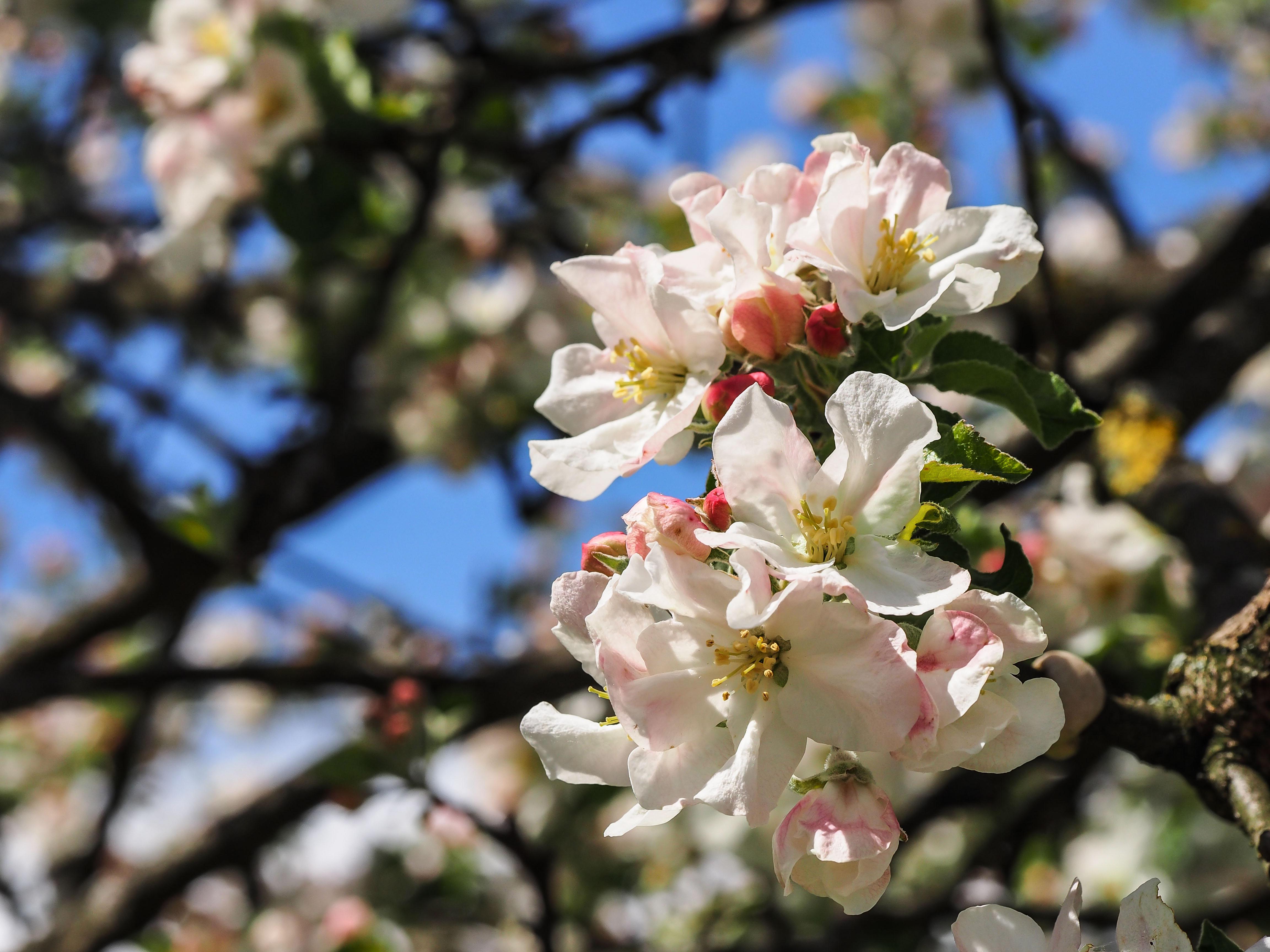 Frühling_16-80