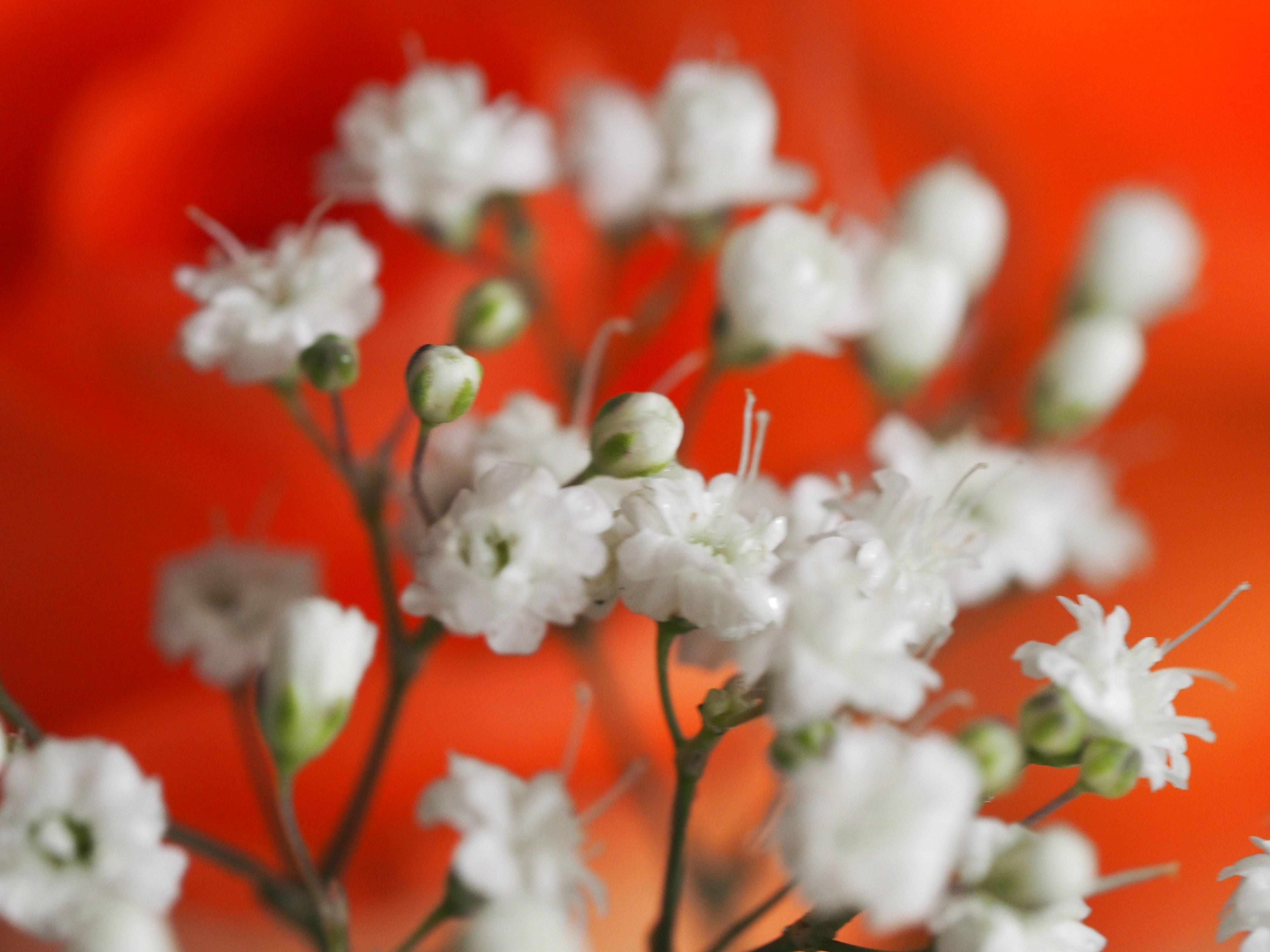 Frühling_16-7