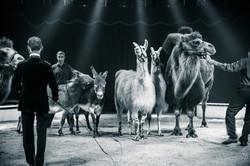 Première_Circus_Nock-16