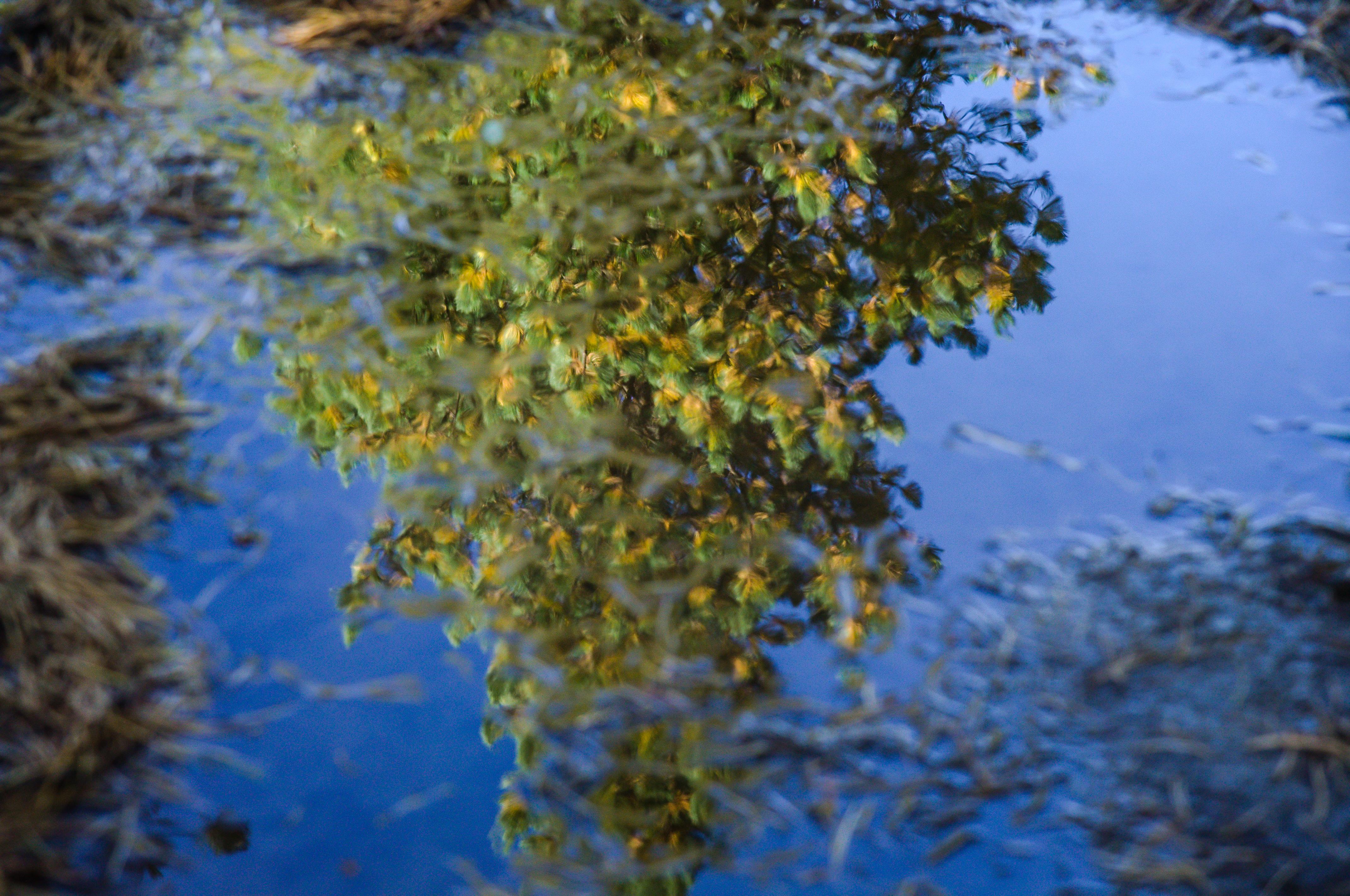Natur_StMoritz-8