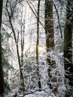 Winterwonderland_Zofingen_BO-30