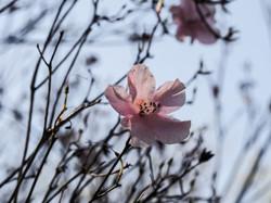 Frühling_16-30