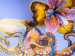 bellis et animal - Krake Detail