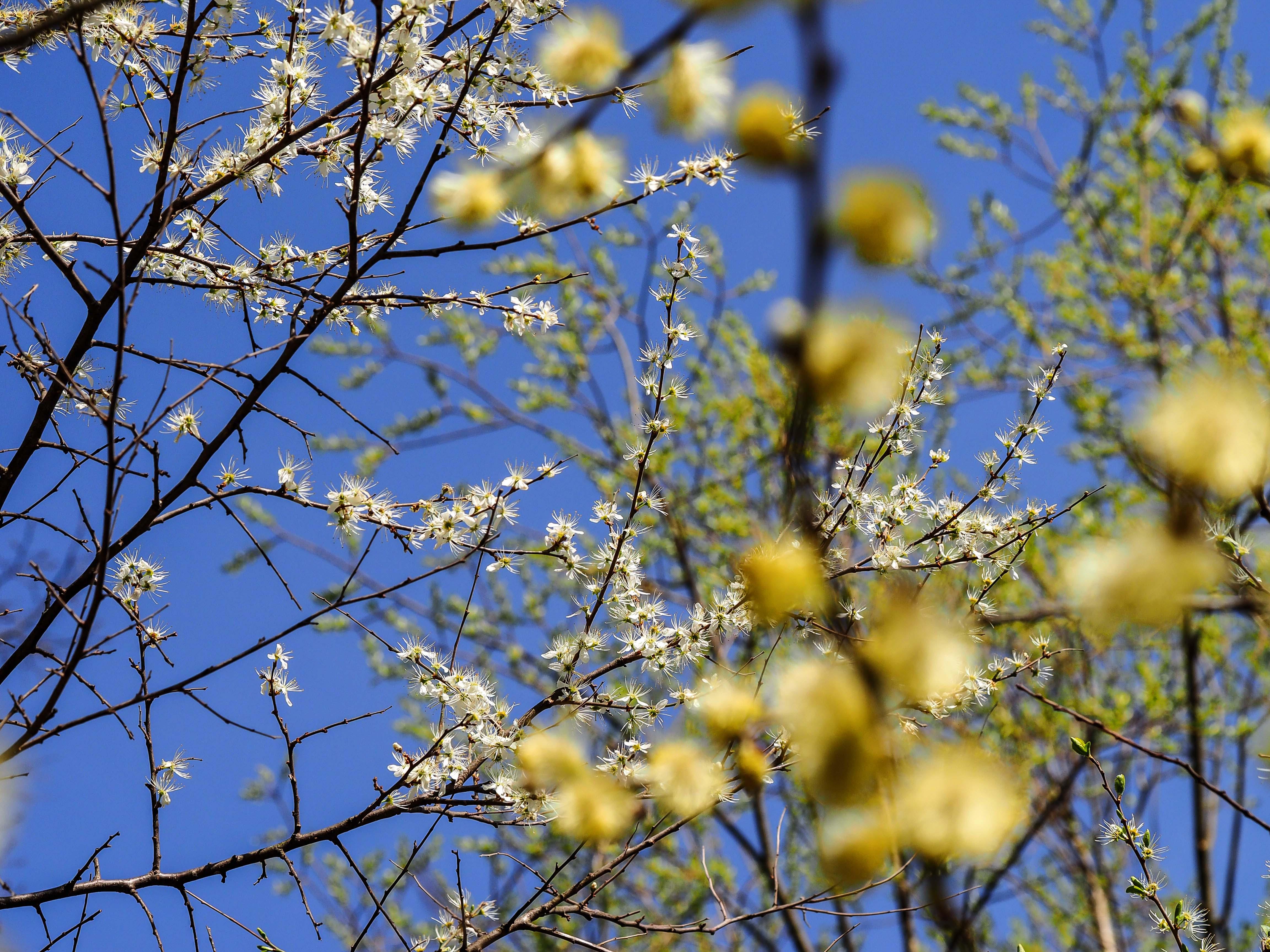 Frühling_16-41