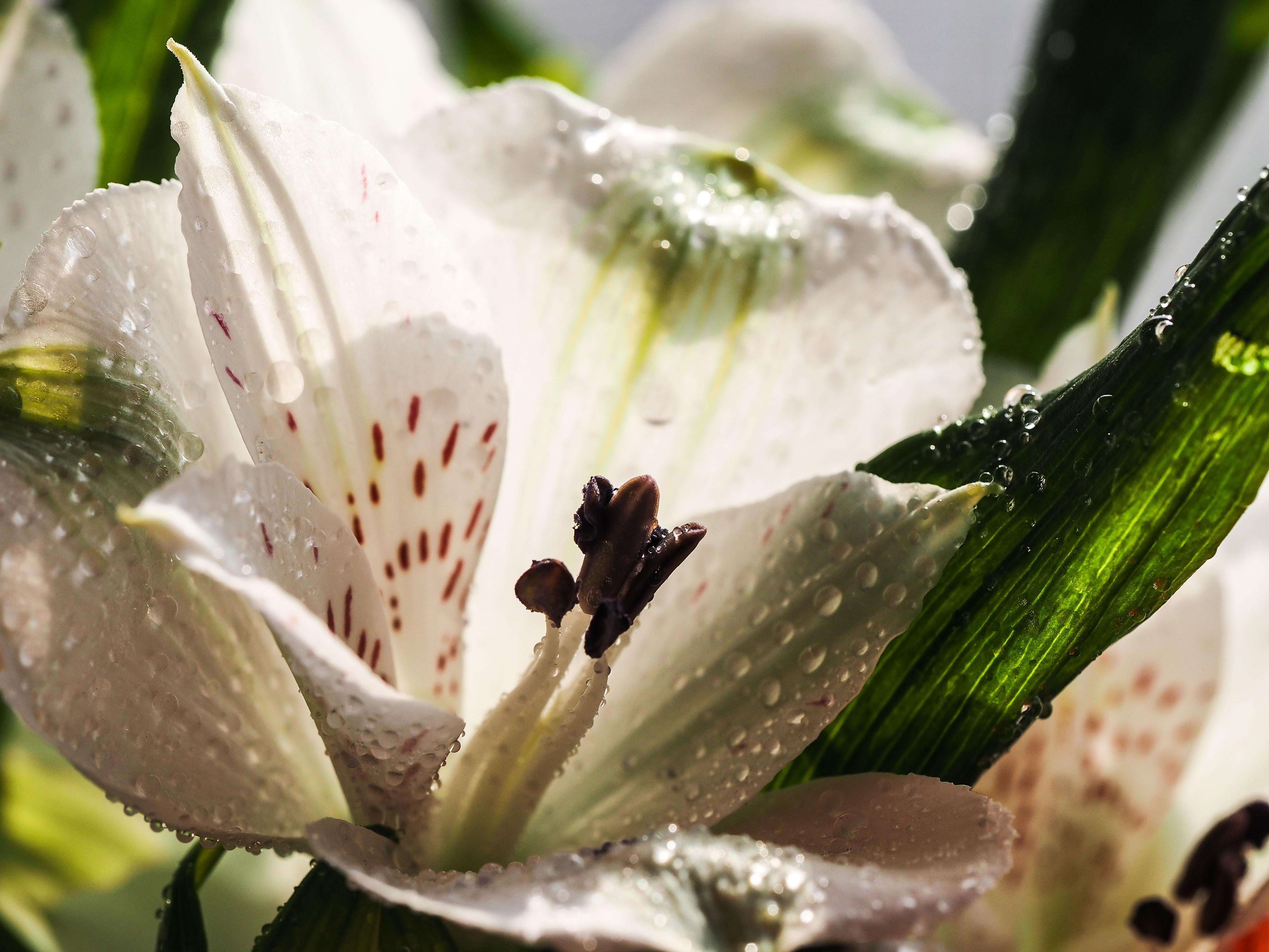 Frühling_16-15