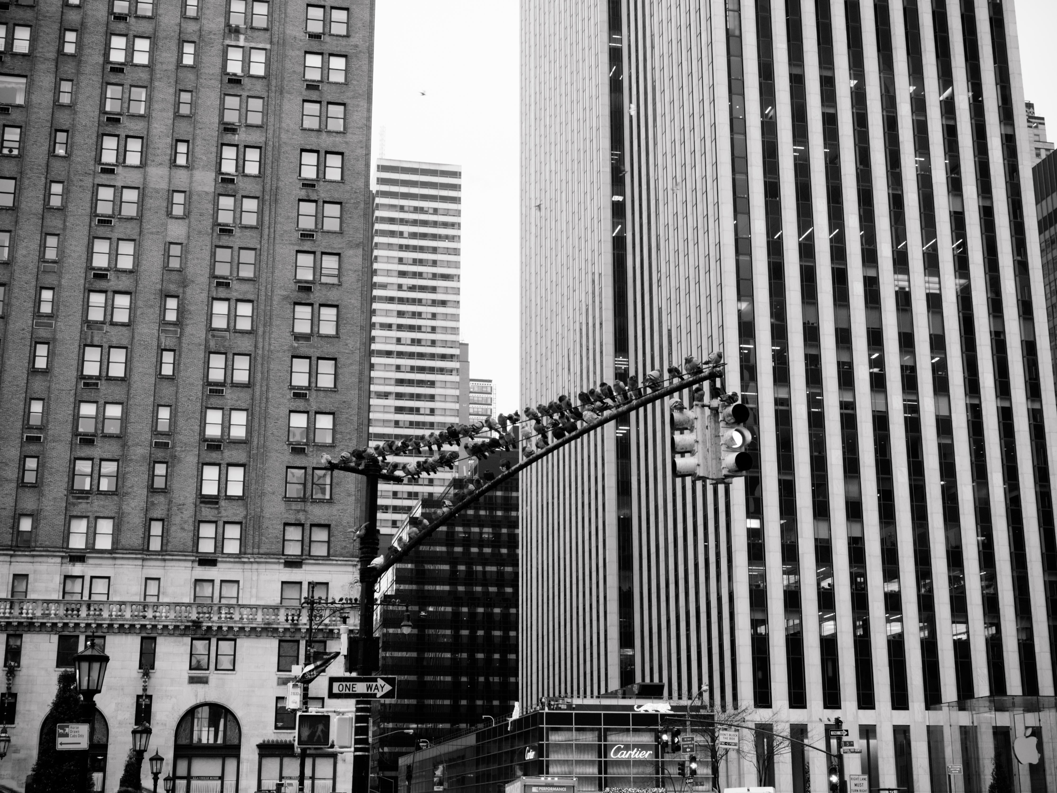 Studienreise New York_BO_ohne WZ-838