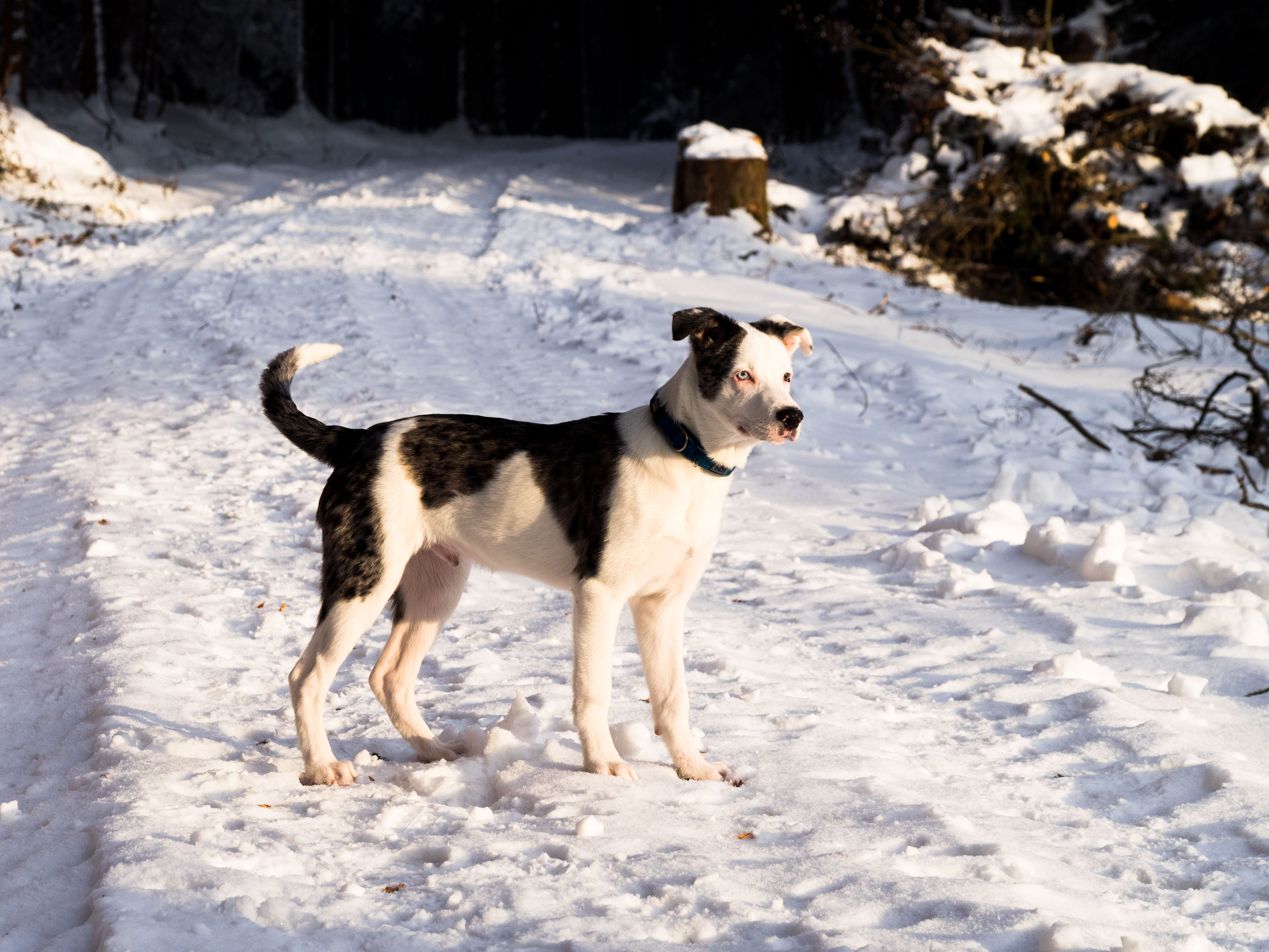 Winterwonderland_Zofingen_BO-20
