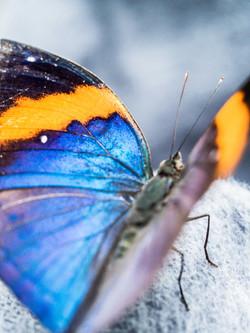 16_02_Papillorama Kerzers-13