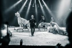 Première_Circus_Nock-20