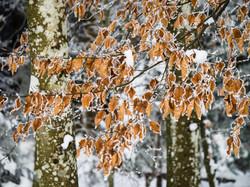 Winterwonderland_Zofingen_BO-27