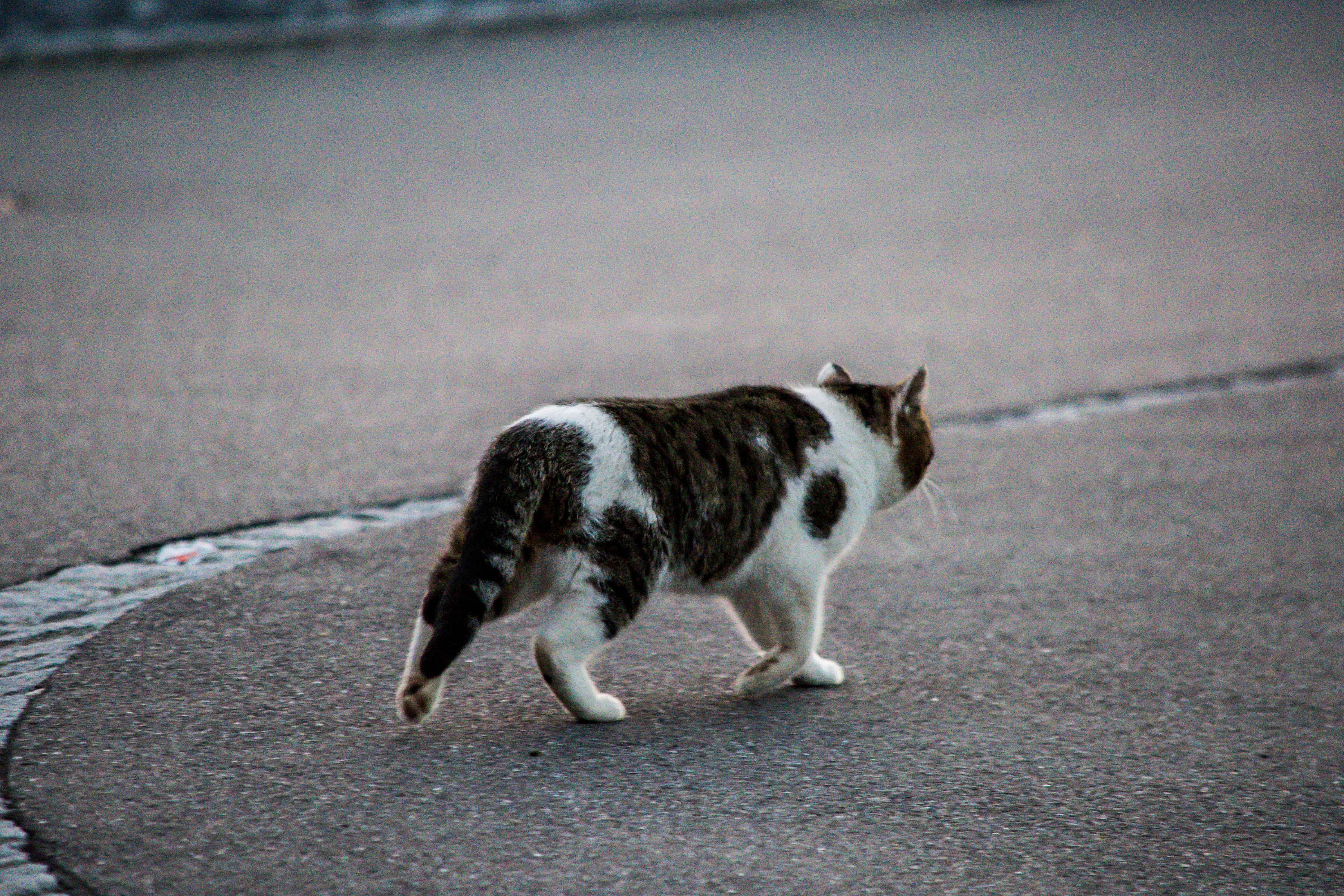 Spaziergang_Olten-Schönenwerd-5