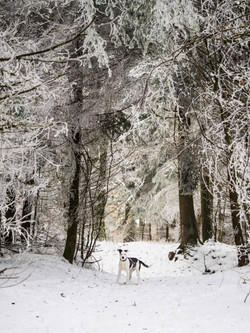 Winterwonderland_Zofingen_BO-29