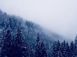 skoga 2