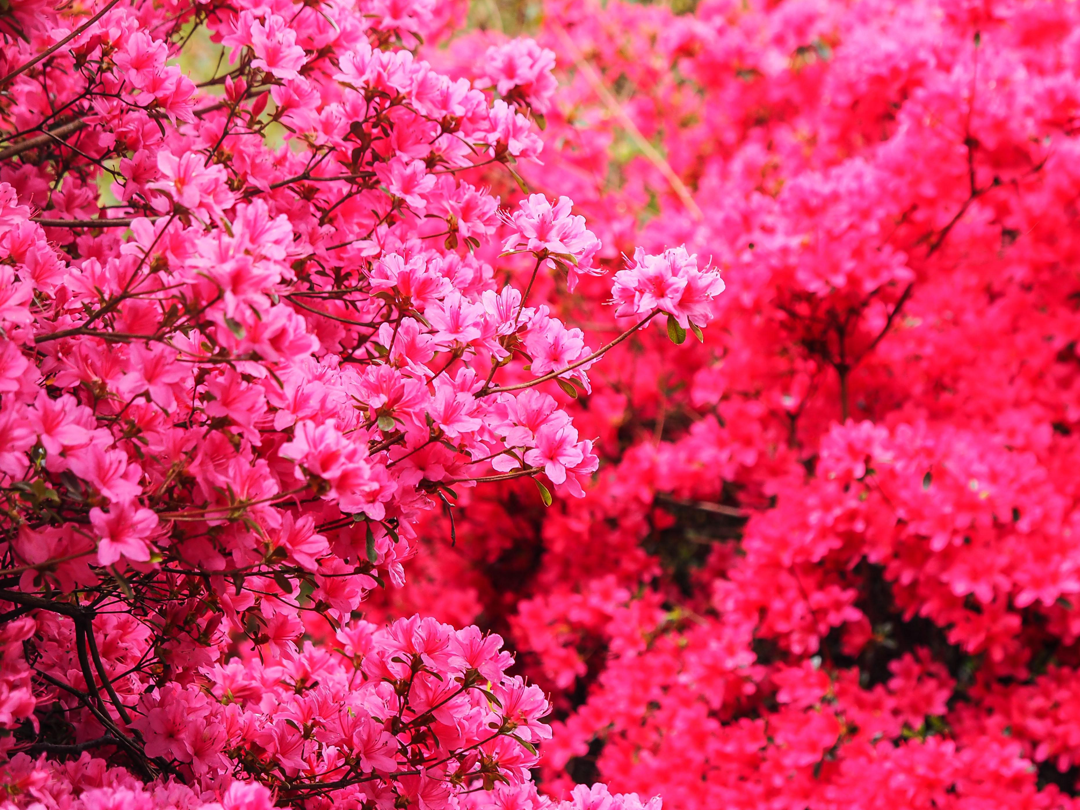 Frühling_16-53