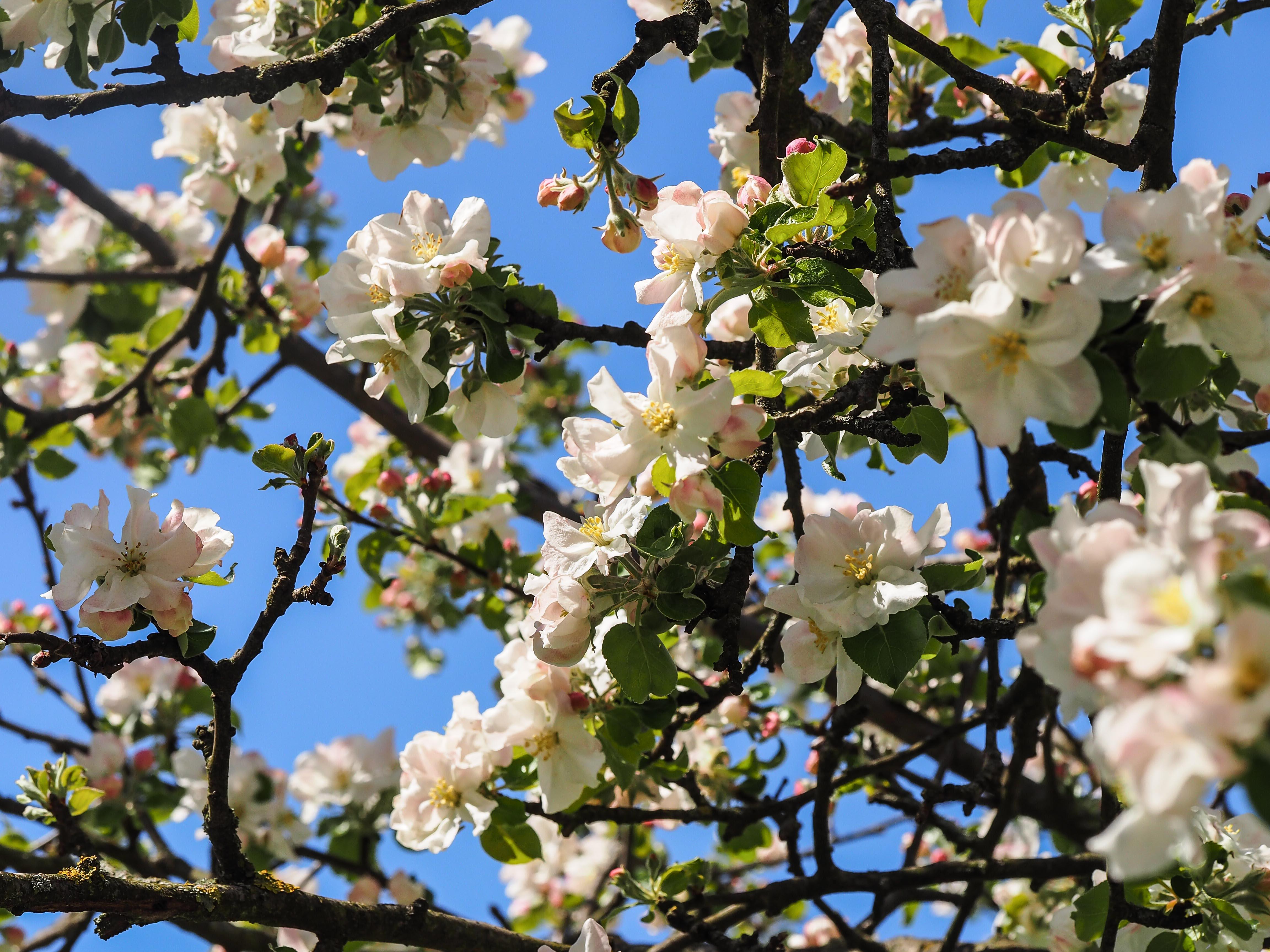 Frühling_16-79