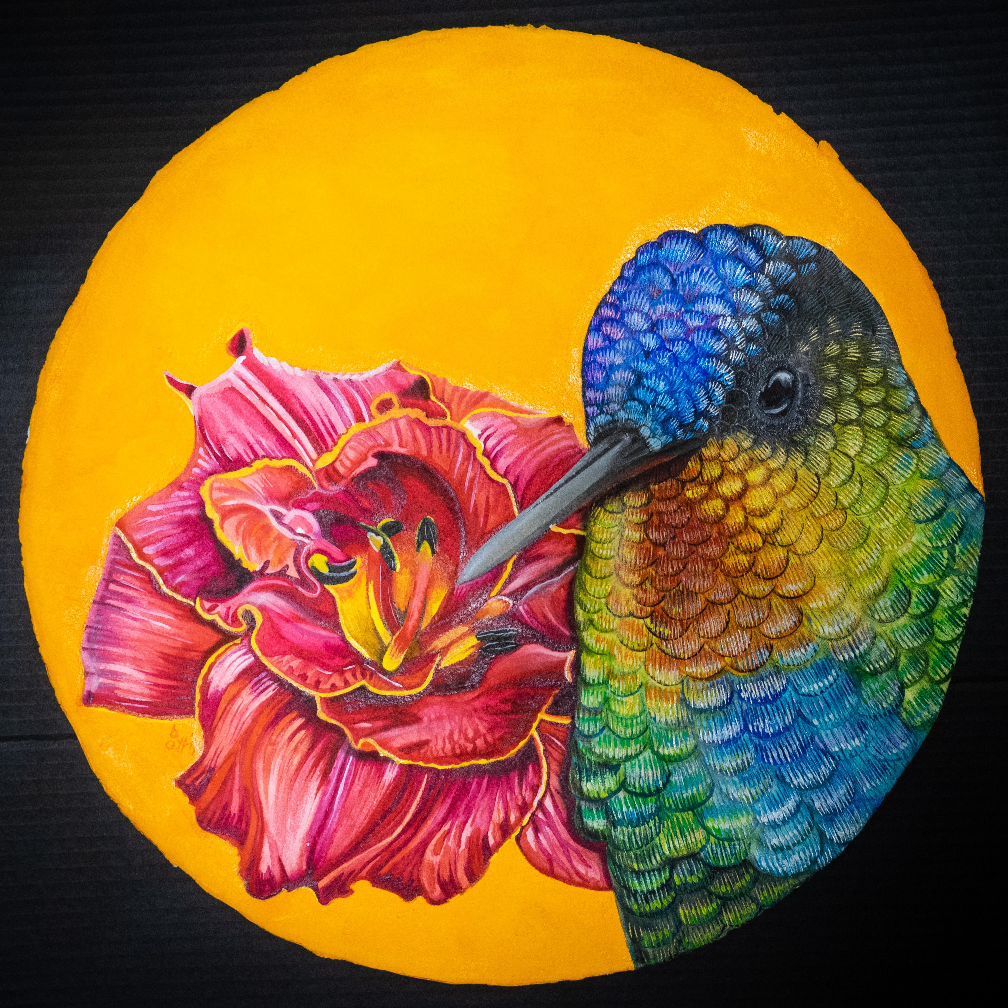 bellis et animal - Kolibri I