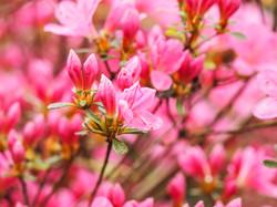 Frühling_16-56
