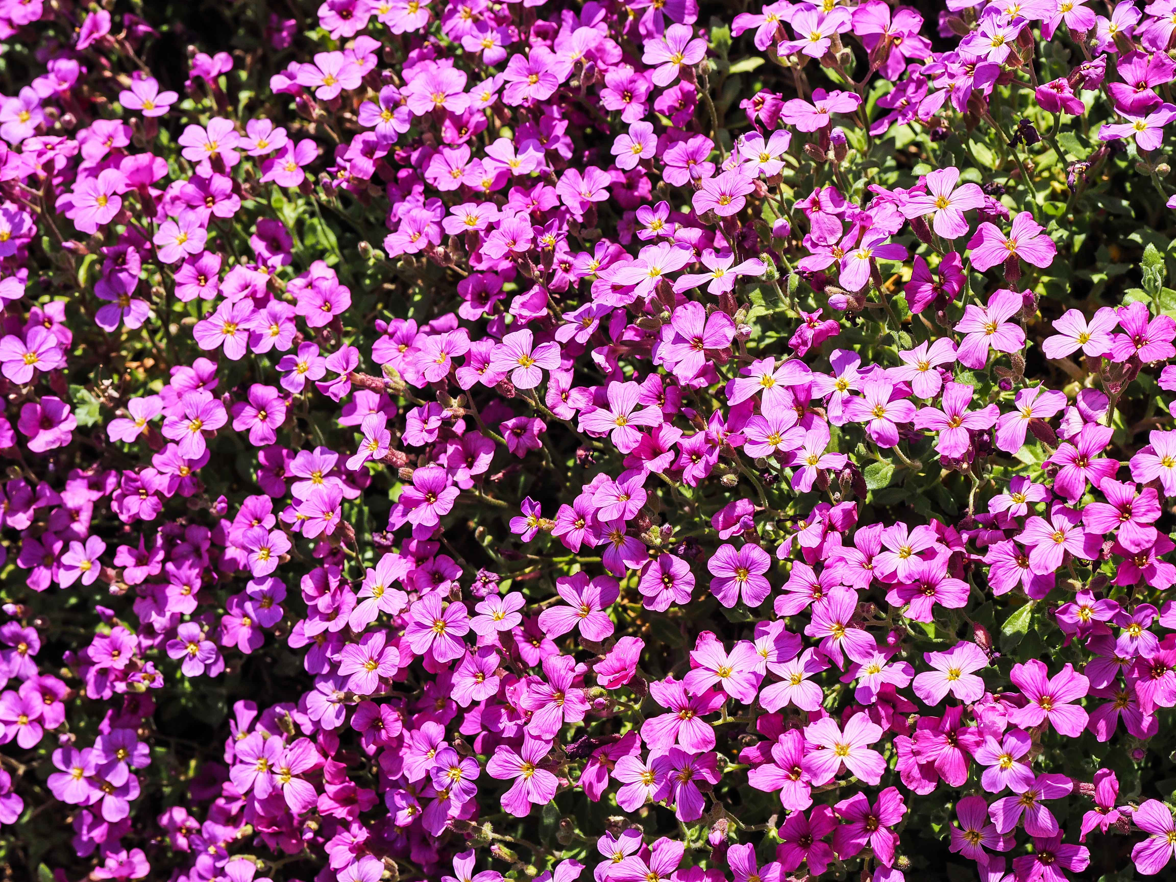 Frühling_16-38