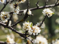 Frühling_16-27