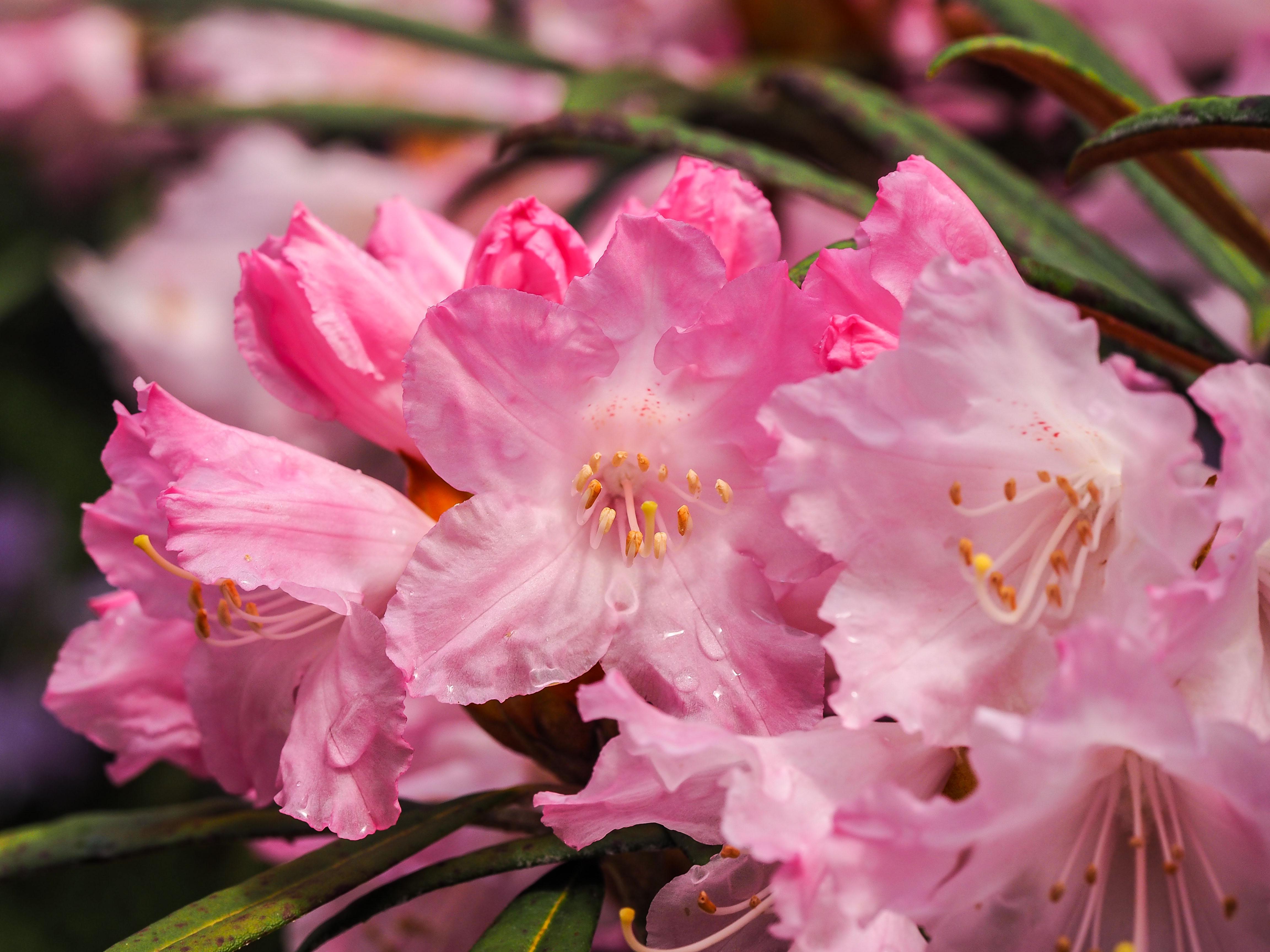 Frühling_16-61