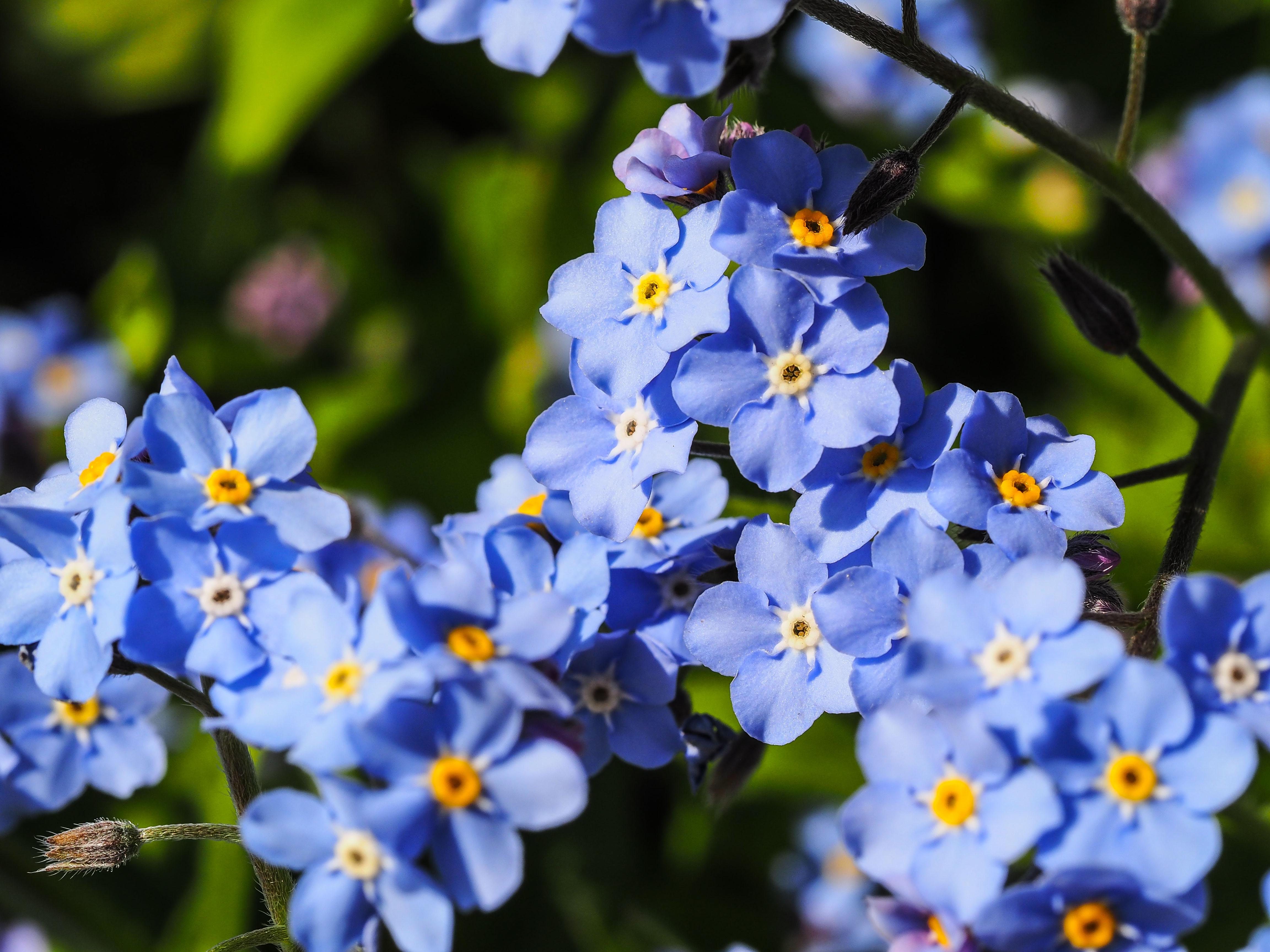 Frühling_16-39