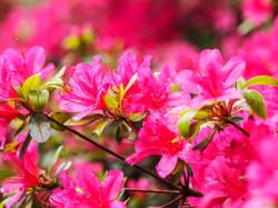 Frühling_16-54