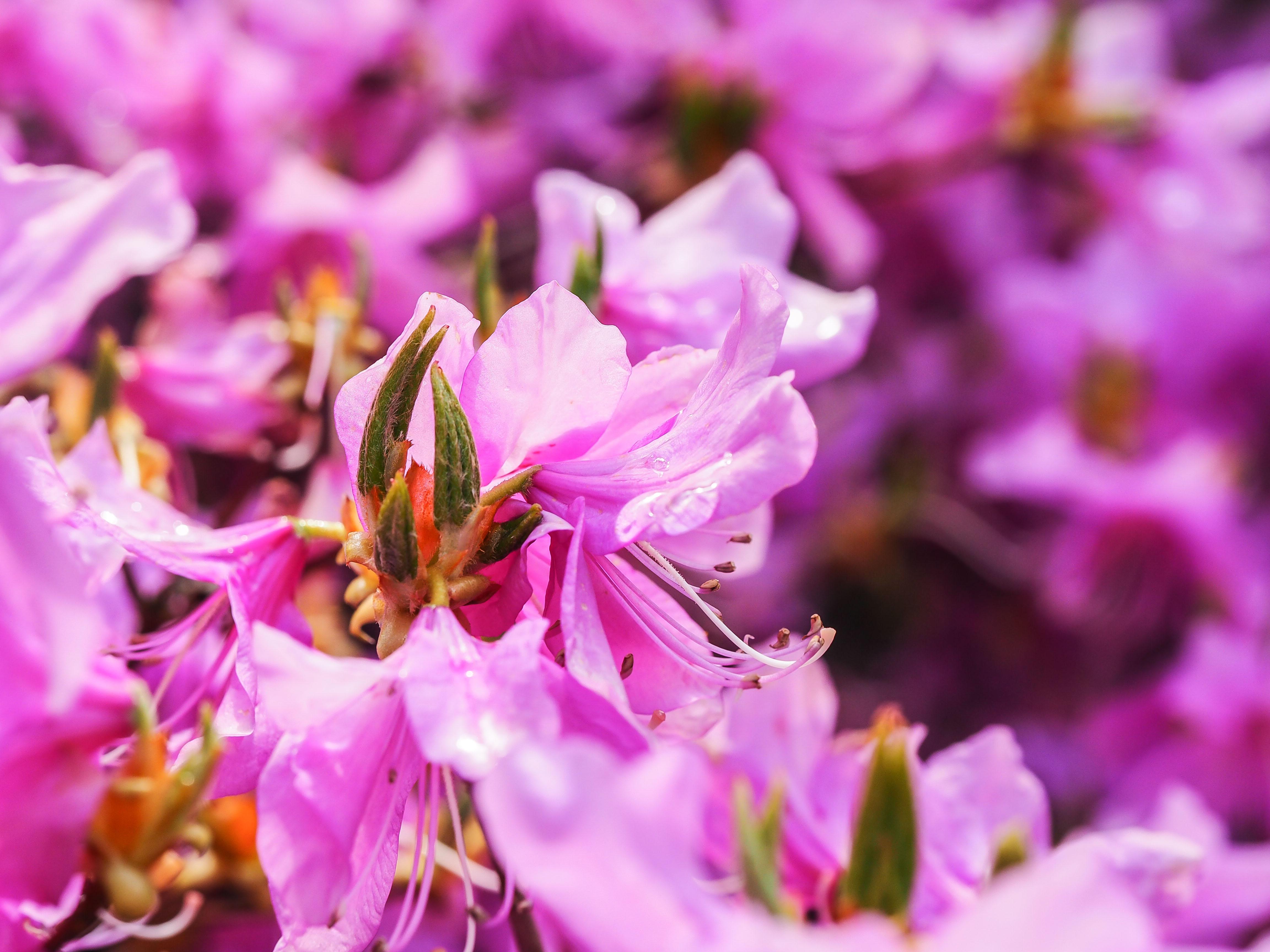 Frühling_16-62