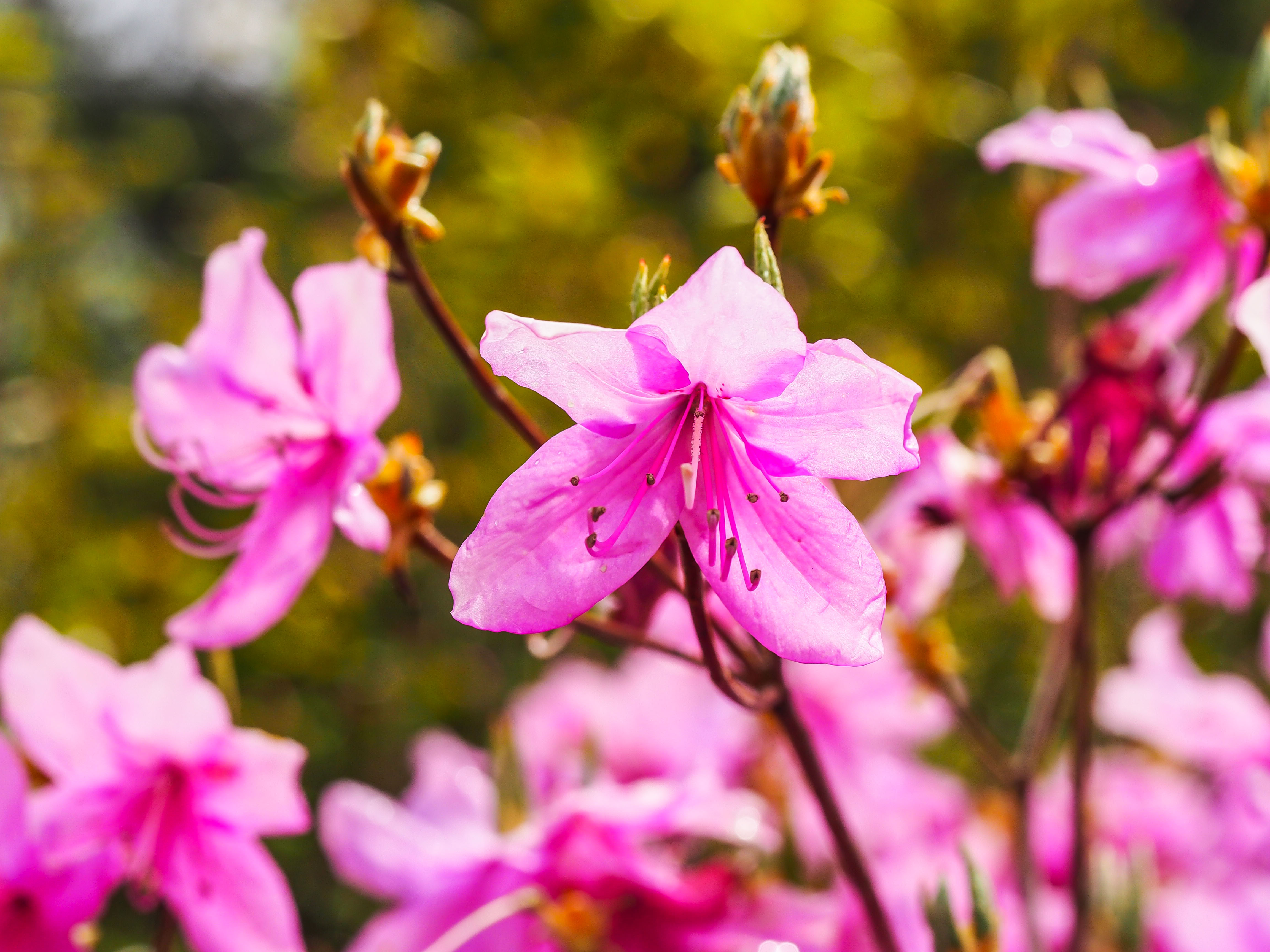 Frühling_16-63