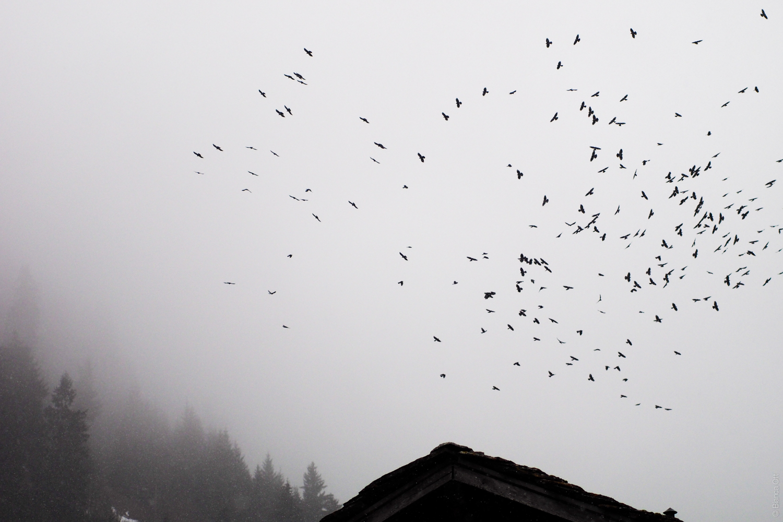 Tiere_Vogelschwarm_1