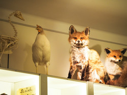 Naturmuseum-48