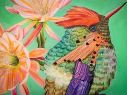 bellis et animal - Kolibri II Detail