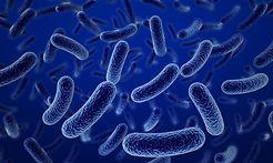 bacterias, hongos, virus, patógenos,