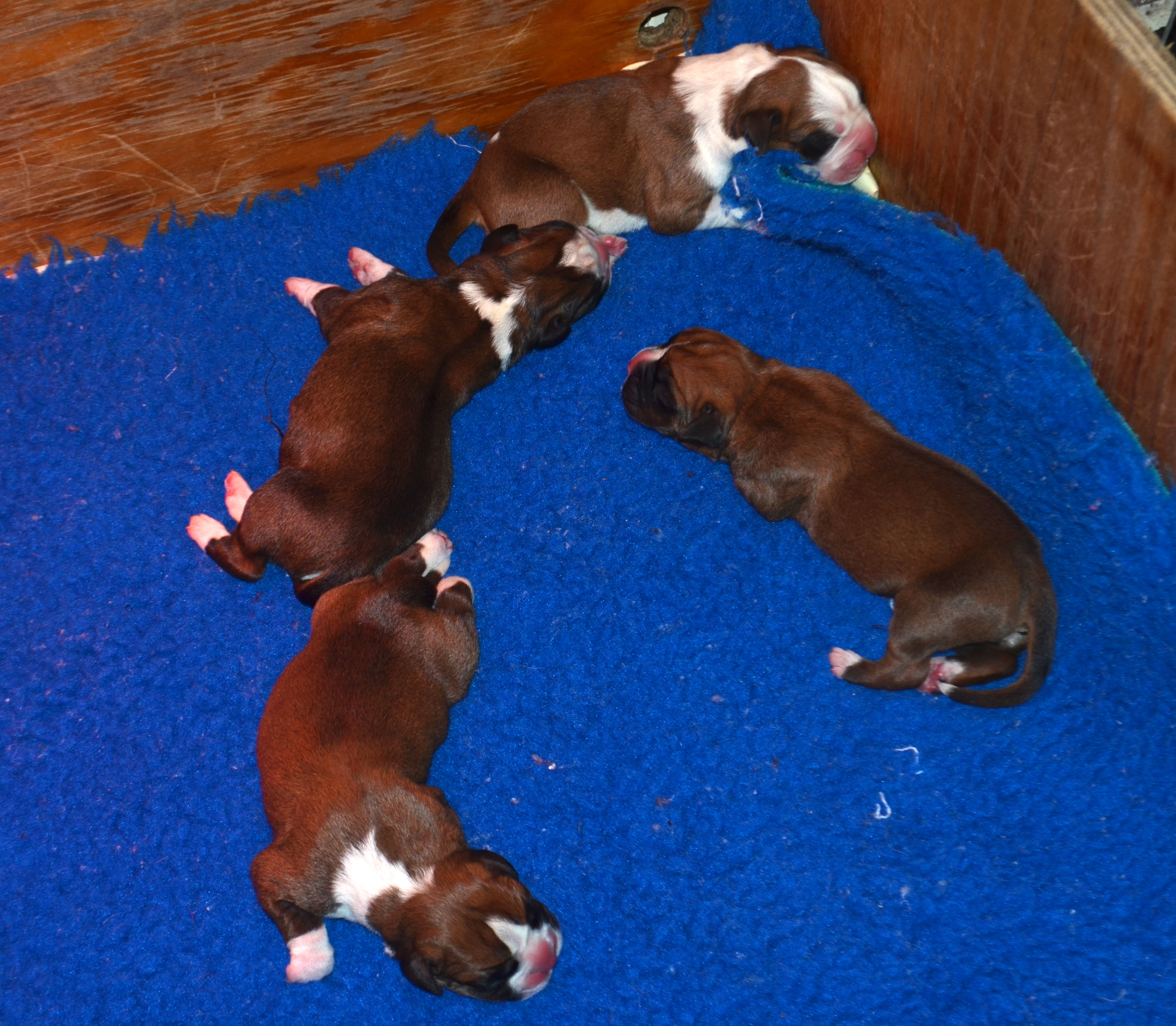 Demi 4 Babies
