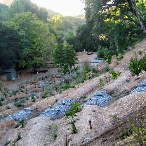 Hillside Orchard as Erosion Mitigation Tool