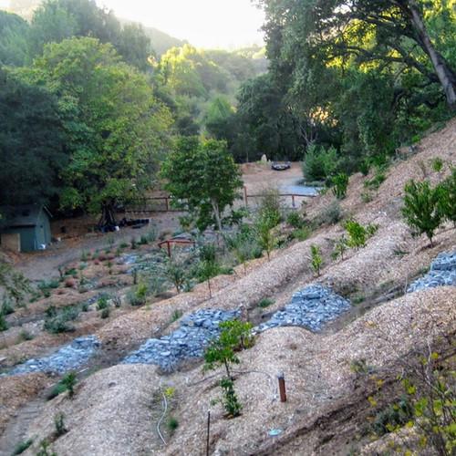 Biodiversity orchard with pond system that optimizes microclimates & mitigates erosion
