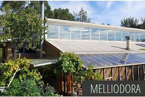 MELLIODORA - Interactive Report