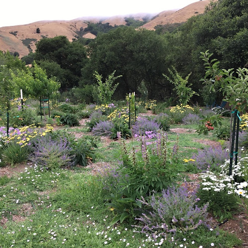 Guilded Mixed Fruit Orchard