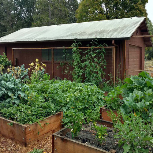Raised veggie boxes in keyhole pattern to optimize growing space & workflow