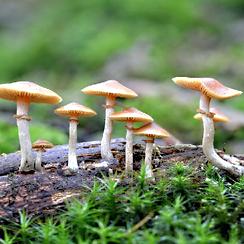 Mushroom-1.png