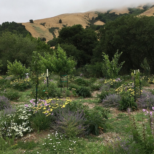 Guild mixed fruit orchard to optimize integrated pest mangement & soil building
