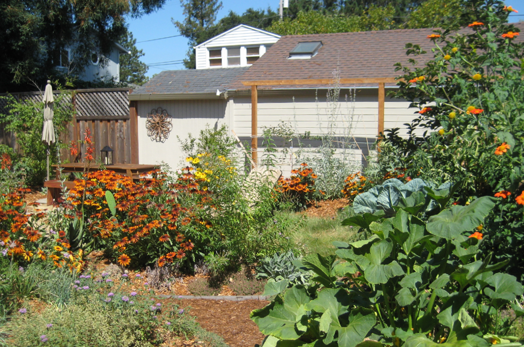 Barefoot backyard with mix of edibles & pollinator plants