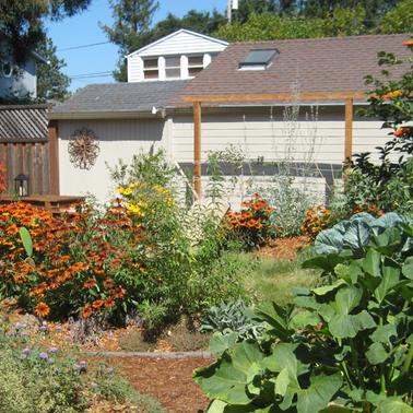 Barefoot backyard with mix of edibles & pollinator plants